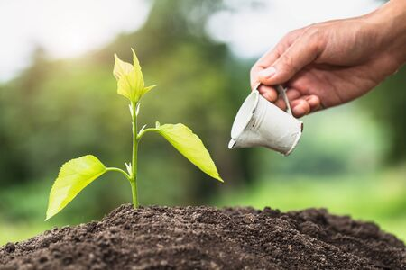 Hands of farmer  nurturing tree growing on fertile soil,  Maintenance of growing seedlings,  Hands protect trees,   plant trees to reduce global warming, Forest conservation, World Environment Day.