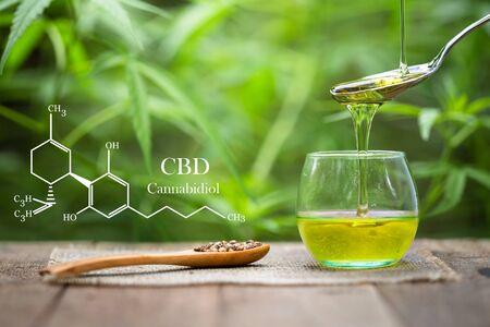 cannabinoids in marijuana CBD elements, Pouring hemp oil into glass Jar and hemp seeds in a wooden spoon on a green hemp leaf background, CBD Hemp oil.