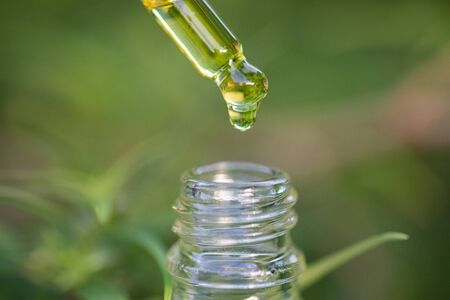 Droplet hemp oil into a glass bottle, CBD Hemp oil, Concept of herbal alternative medicine. Scientific research. Stok Fotoğraf