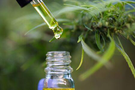 CBD hemp oil, droplet dosing a biological and ecological hemp plant herbal pharmaceutical cbd oil from a jar.