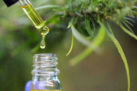 CBD hemp oil, Hand holding bottle of Cannabis oil in pipette Stock Photo