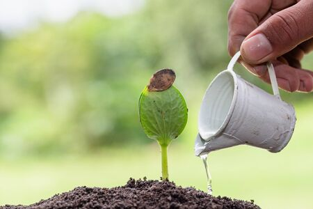 Plant growing on soil and drop of water,  protecting environment. Growing seedlings, The idea of planting trees to reduce global warming, World Environment Day.