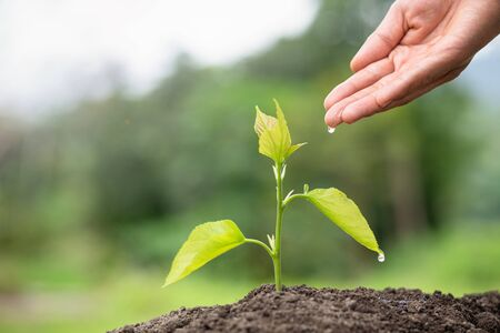 Small trees are growing, hands to care for and watering. Concept of environmental conservation and global warming reduction Stock Photo