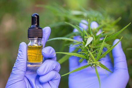 Hemp oil, Hand holding bottle of Cannabis oil against Marijuana plant, CBD oil pipette 写真素材