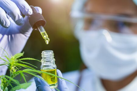 Portrait of scientist with mask, glasses and gloves researching and examining hemp oil in a greenhouse. Concept of herbal alternative medicine, cbd oil, pharmaceptical industry Stok Fotoğraf