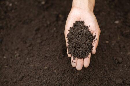 Farmer holding soil in hands close up.  Farmer is checking soil.  Reklamní fotografie