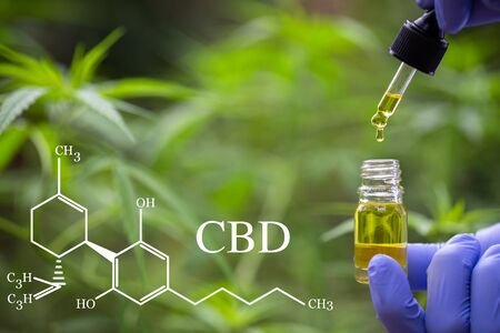 CBD elements in Cannabis, droplet dosing a biological and ecological hemp plant herbal pharmaceutical cbd oil from a jar. Concept of herbal alternative medicine. Reklamní fotografie
