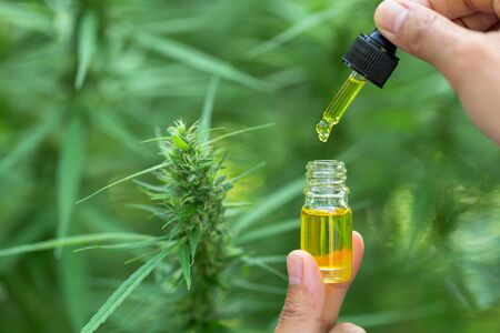 CBD hemp oil, Hand holding bottle of Cannabis oil in pipette. Herbal Treatment, Alternative Medicine