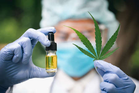 Doctor holding a bottle of hemp oil, Medical marijuana products including cannabis leaf, cbd and hash oil, alternative remedy or medication,medicine concept. 版權商用圖片 - 151509131