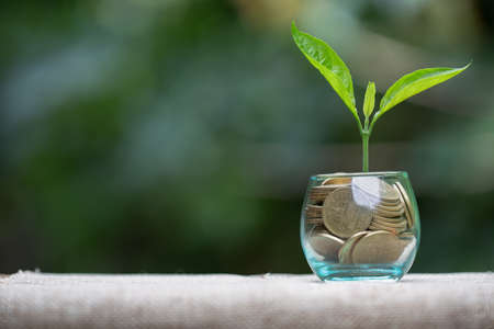 Green tree growing on money coins, ,saving, growth, sustainable development, economic concept, Texture photo with copy space for text 版權商用圖片