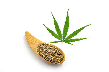 Hemp leaf and seeds on white background, Medical marijuana. 版權商用圖片 - 151840552