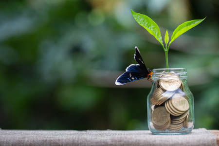 Plant growing in savings coins jar,  Business growth, interest and investment concept.