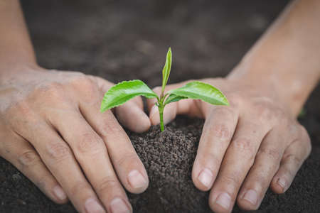 The hands of the young people planting The Seedlings on the soil. World Environment Day Concept.