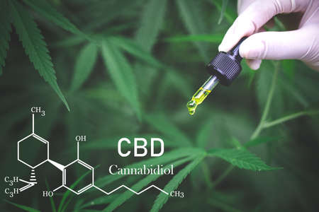 Cannabis oil, CBD oil cannabis extract, Medical cannabis concept,