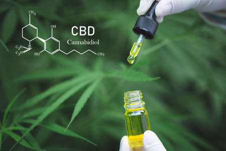 Cannabis of the formula CBD cannabidiol. hemp oil, CBD oil cannabis extract, Medical cannabis concept, Imagens