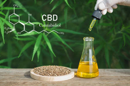 CBD elements, Hand holding Pipette with cannabis oil against Cannabis plant. CBD oil hemp, Medicinal marijuana with extract oil in a bottle. Medical marijuana concept 免版税图像