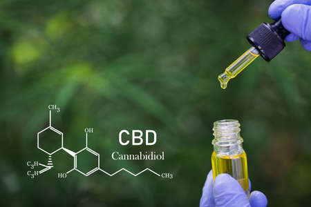 Formula CBD cannabidiol, Scientist conducts experiments by synthesising compounds with using dropper in a test tube. cbd hemp oil,  medicine concept.