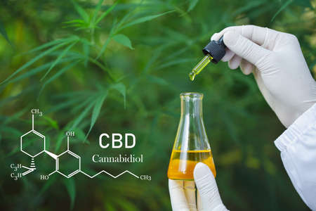 formula CBD cannabidiol, droplet dosing a biological and ecological hemp plant herbal pharmaceutical,   medical marijuana and oil, alternative remedy or medication,  medicine concept 免版税图像