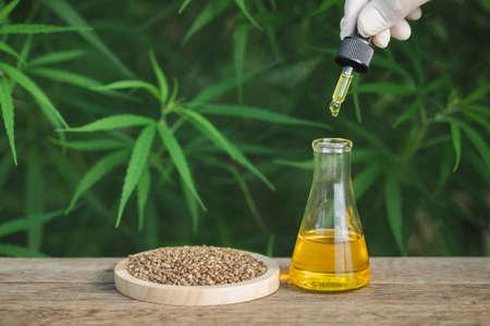 CBD hemp oil, Hand holding bottle of Cannabis oil against Marijuana plant. Herbal Treatment, Alternative Medicine Banco de Imagens