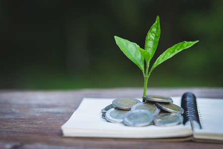 Green tree growing on money coins, ,saving, growth, sustainable development, economic concept