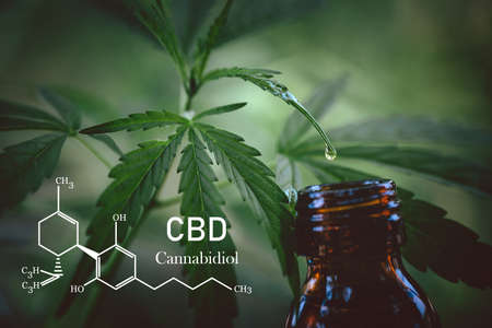 Cannabidiol CBD Oil Chemical Formula. A drop of hemp oil that comes out of the hemp leaf, Medical cannabis concept.