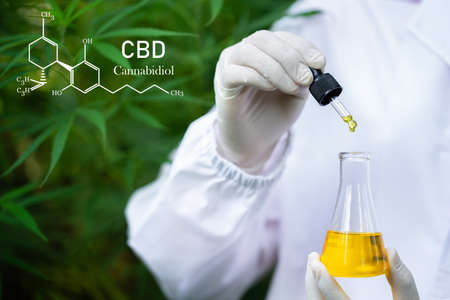 formula CBD cannabidiol, droplet dosing a biological and ecological hemp plant herbal pharmaceutical,   medical marijuana and oil, alternative remedy or medication,  medicine concept Standard-Bild