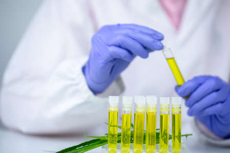 Female scientists researching hemp oil. cannabis oil cbd. Concept of herbal alternative medicine, pharmaceptical industry.