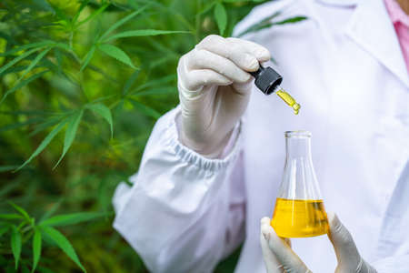 Female scientists researching hemp oil. cannabis oil cbd.