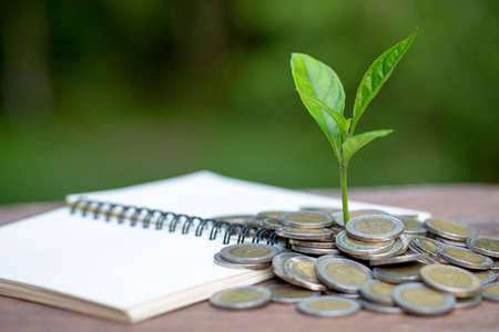 coins and money growing plant for finance and banking, saving money or interest increasing concept, Business growth