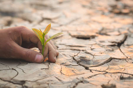 hand holding young plant  with sunshine.Planting trees to reduce global warming, environment Earth Day, Forest conservation concept. 版權商用圖片