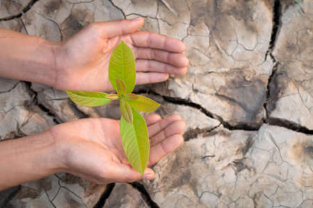 The hands of a teenage boy who is taking care of the growing seedlings on the background of dry and cracked soil. Natural care concepts and world preservation,  World Environment Day.
