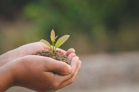 Child hands holding and caring a young green plant, Hand protects seedlings that are growing, planting tree, reduce global warming,  growing a tree, love nature, World Environment Day
