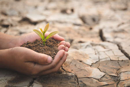 A tree in the hands of a child on the background of dry and cracked soil, plant a tree, reduce global warming, The spring, World Environment Day, eco earth day