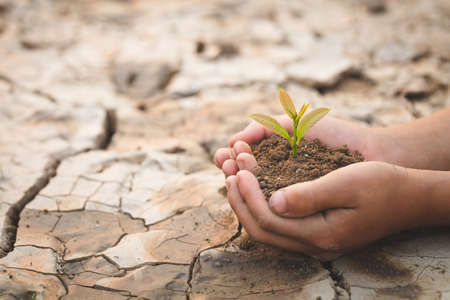 child hand holding a small seedling on the background of dry and cracked soil, plant a tree, reduce global warming, World Environment Day 版權商用圖片