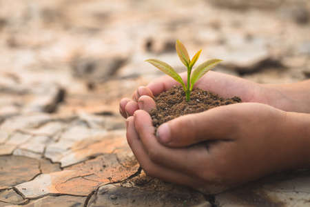 Trees grow in human hands on the background of dry and cracked soil, plant a tree, reduce global warming, The spring, World Environment Day, eco earth day.