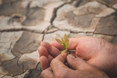 Hands holding and caring a green young plant, Natural care concepts and world preservation, global warming reduction. World Environment Day.