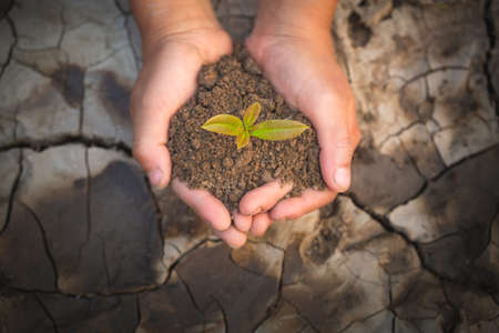 Two hands holding a little green tree plant with soil on the background of dry and cracked soil, plant a tree, reduce global warming, The spring, World Environment Day, eco earth day