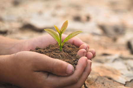 Small seedlings that grow in human hands, plant trees to reduce global warming, Forest conservation, World Environment Day.