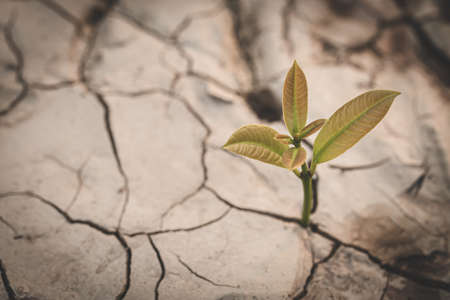 A small tree grows on the parched and dry ground, The spring, World Environment Day