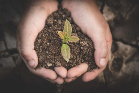 Small seedlings that grow in human hands, plant trees to reduce global warming, Forest conservation, World Environment Day. The spring. Banque d'images