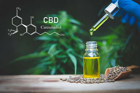 CBD hemp oil, Hand holding bottle of Cannabis oil against Marijuana plant. Herbal Treatment, Alternative Medicine Banque d'images
