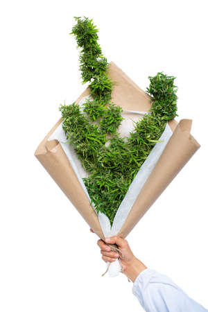 Hand holding cannabis bouquet  isolated on the white background, Gift with a bunch of cannabis.