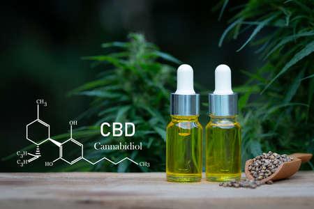 Cannabis oil, CBD oil cannabis extract, ecological hemp plant herbal pharmaceutical cbd oil from a jar. Banque d'images