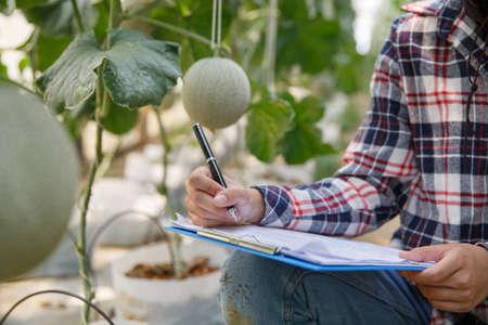 Female farmers monitor the growth of melon or cantaloupe In organic farms. Фото со стока