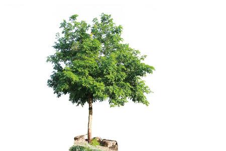 trees: trees