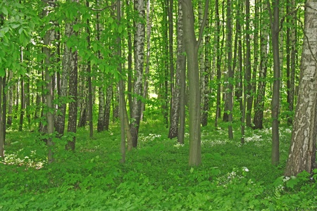 Green fairy forest in sunlight, natural summer time Stock Photo - 10968369