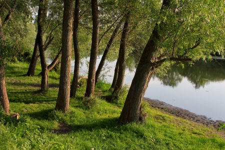 forest stream: Beautiful landscape with trees, grass and river  in summer