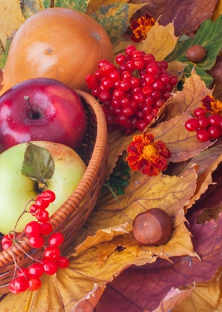 Basket with apples, ash-berry and maple leaves autumn still life
