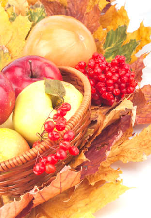 ashberry: Basket with apples, ash-berry and maple leaves autumn still life