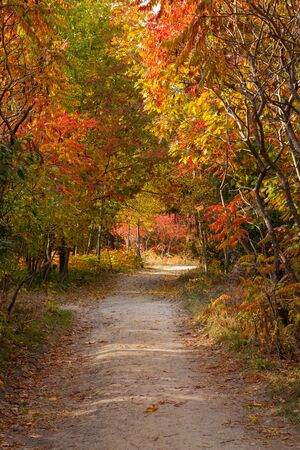 fall landscape: Pathway in the fall, road and tree autumn landscape